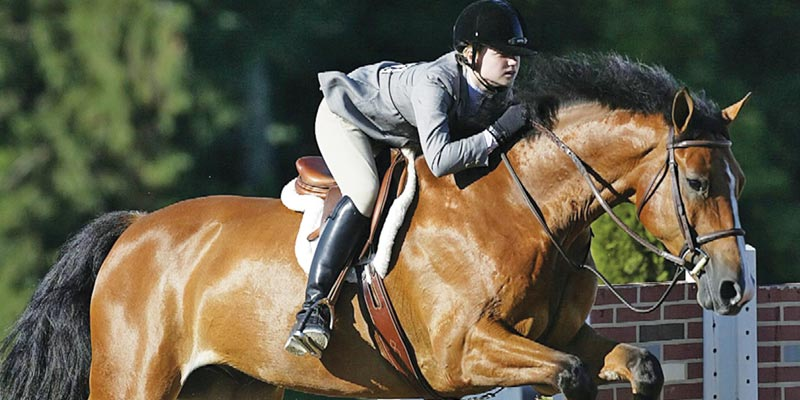 Article Image Equestrian Programs in the U.S.