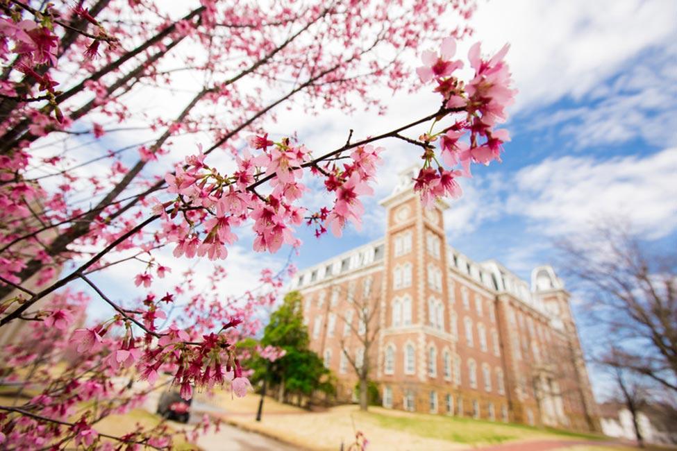 University of Arkansas  gallery image5