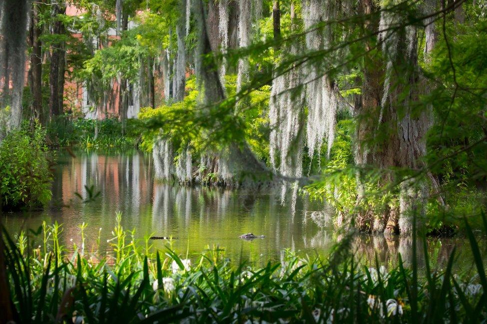 University of Louisiana at Lafayette  gallery image3